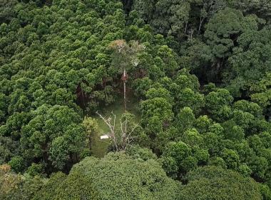 Bosque 10