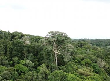 Bosque arbol principal