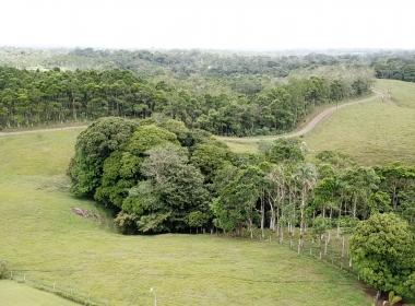 Reforestacion 2