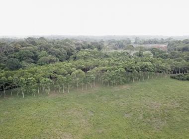Reforestacion 4