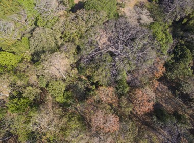 Vista aerea arboles